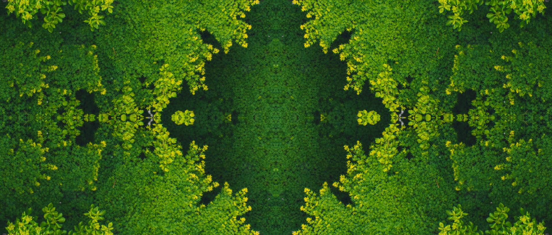 tycho_easy_fractal_05
